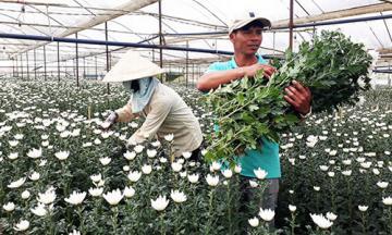 Nông nghiệp Lâm Đồng, Nghệ An bứt phá nhờ nhà đầu tư Nhật