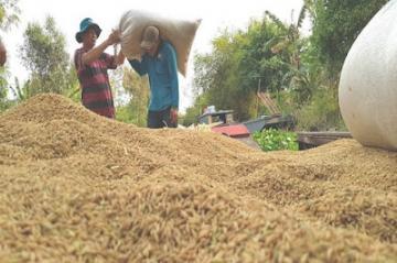 Thượng hiệu gạo Việt Nam sẽ được bảo hộ quốc tế