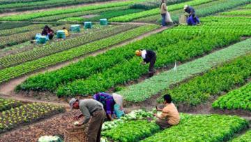 Nông nghiệp hữu cơ được Nhà nước dành nhiều hỗ trợ