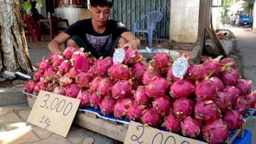 'Giải mã' việc Trung Quốc đột ngột ngưng mua thanh long Việt Nam