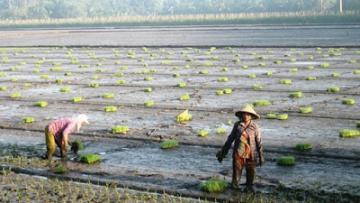 Vụ đông xuân 2018 - 2019: Nỗ lực đạt sản lượng 10,9 triệu tấn lúa