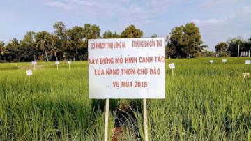 Từ chuyện 'gạo Việt' nghĩ về nông nghiệp hữu cơ