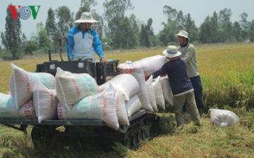 Nông nghiệp Việt Nam » Gạo Việt đã xuất khẩu đi hơn 150 thị trường, cơ hội tiếp tục rộng mở