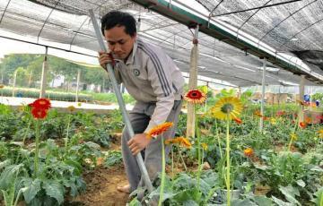 Vườn hoa tiền tỷ của chàng công nhân gác tàu xứ Thanh