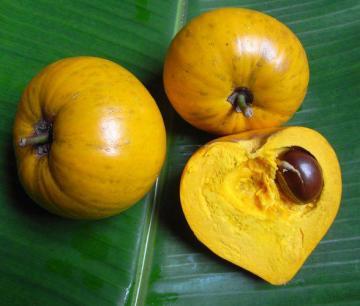 NGƯỜI VIỆT CHÊ QUẢ TRỨNG GÀ (LÊ KI MA) CHÍN RỤNG KHÔNG ĂN, CÒN TRÊN AMAZON RAO BÁN TIỀN TRIỆU MỖI KILOGRAM