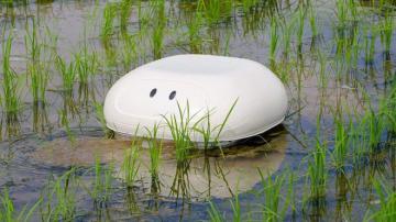 'Vịt' robot giúp nông dân Nhật diệt cỏ không cần hóa chất