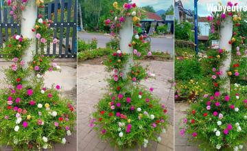 12 cách trồng cây trong ống nhựa vừa đẹp vừa tiết kiệm diện tích