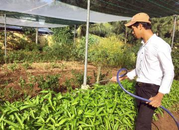 Nhân rộng mô hình trồng rau hữu cơ trong trường học - việc làm mang lại nhiều lợi ích