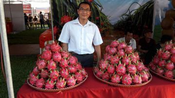 Thanh long ruột đỏ hữu cơ trên đất Hưng Yên