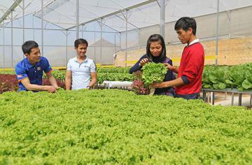 Lâm Đồng: Thạc sỹ 8x khởi nghiệp bằng vườn rau thủy canh