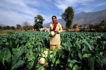Ấn Độ: Cuộc cách mạng từ nông nghiệp hữu cơ