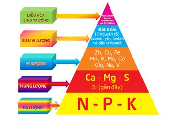 Nhu cầu dinh dưỡng - Nguyên lý hình tháp