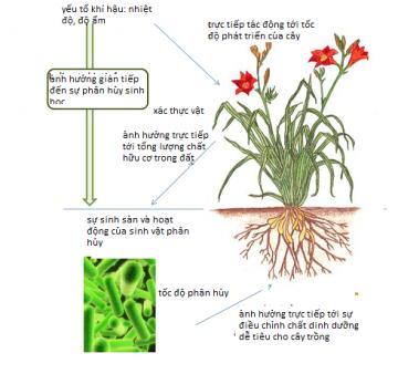 Ủ phân vi sinh