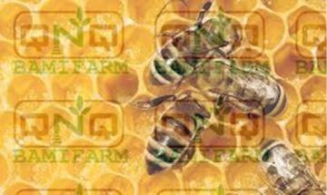 Mật ong sạch Tây Nguyên